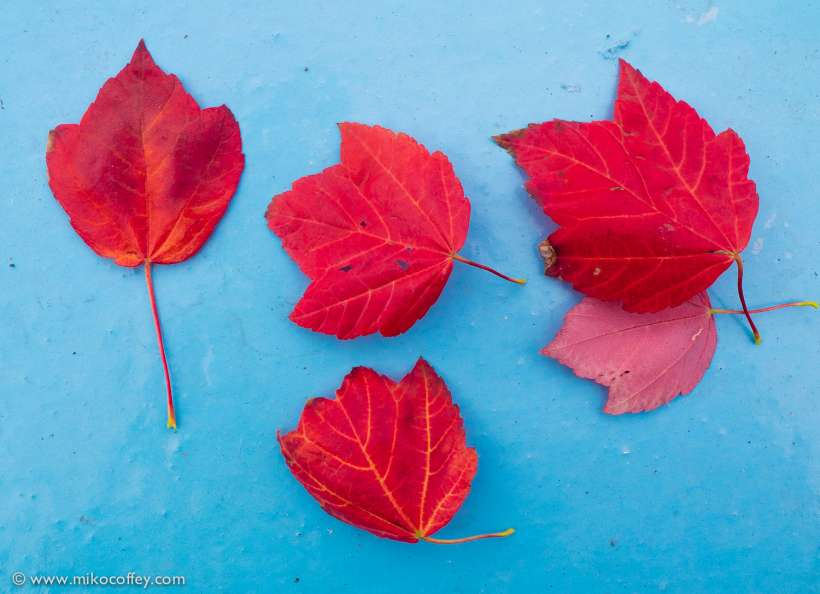 Autumn Leaves in Empty Paddling Pool